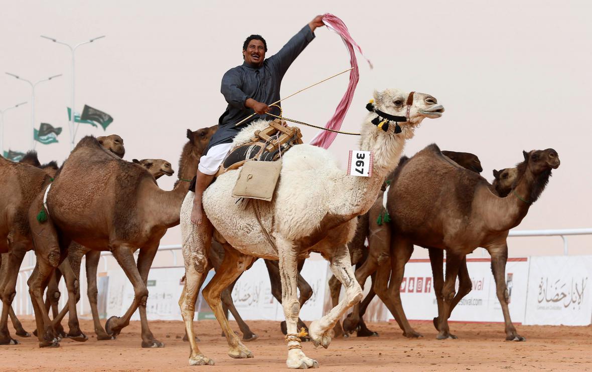 Velbloudí festival v Saúdské Arábii