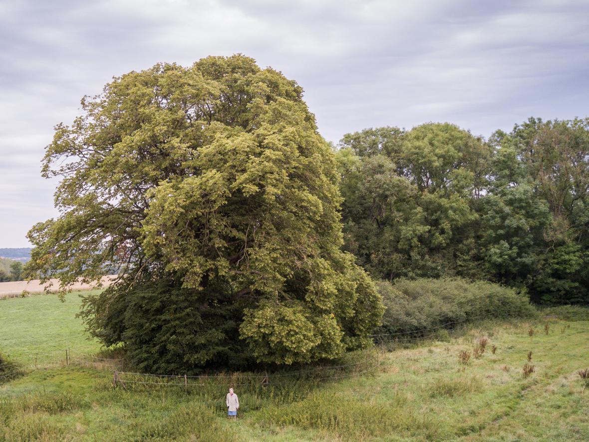 Evropský strom roku 2018