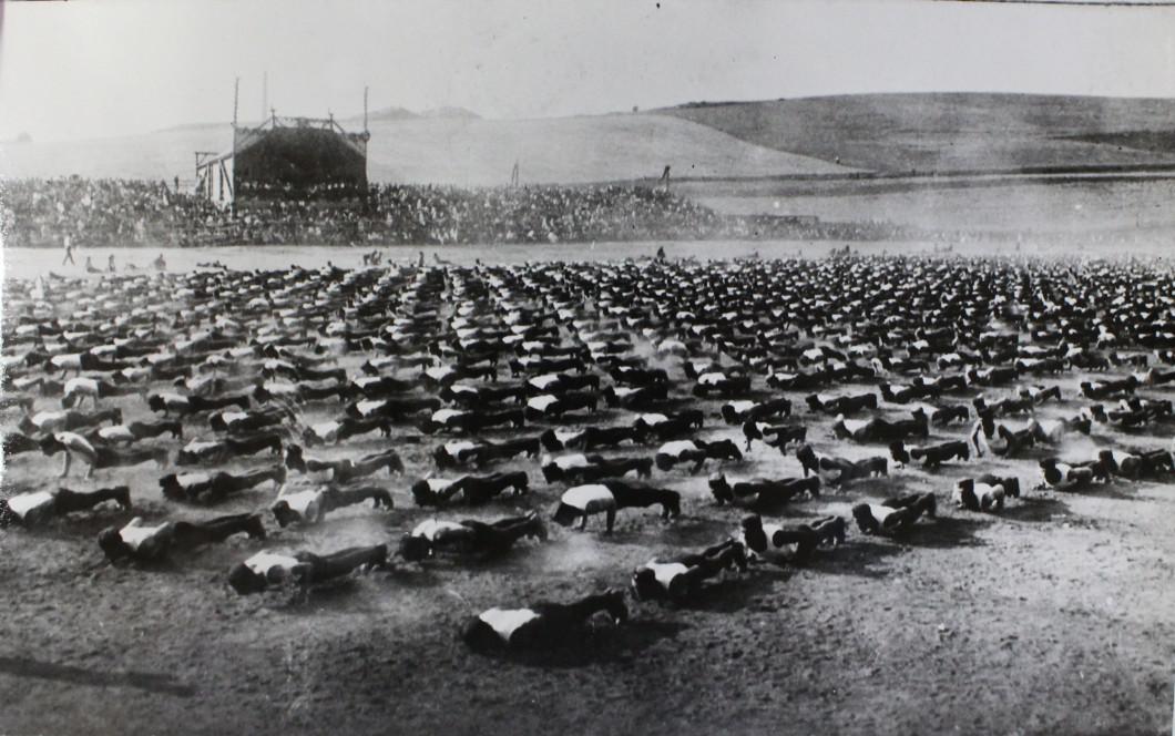 V roce 1922 se za Lužánkami  konala první zemská spartakiáda