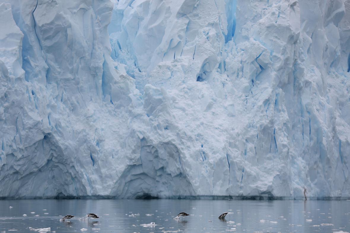 Antarktida - území budoucí největší rezervace na světě