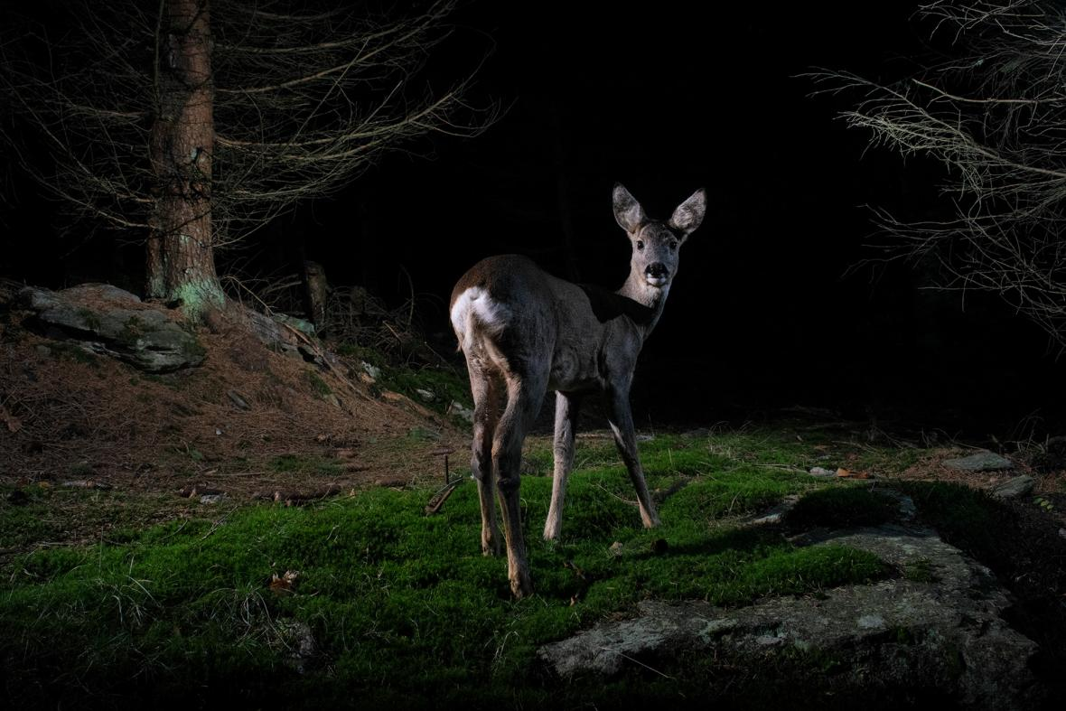 Z výstavy Czech Nature Photo