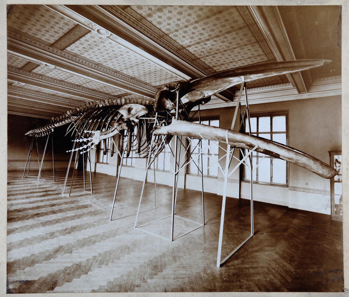 Zajímavosti ze sbírek Národního muzea