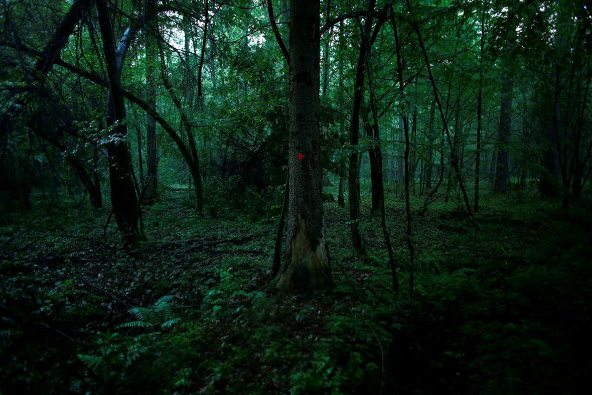 Bielověžský prales