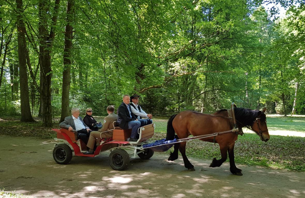 Miloš Zeman během projížďky Bělověžským pralesem