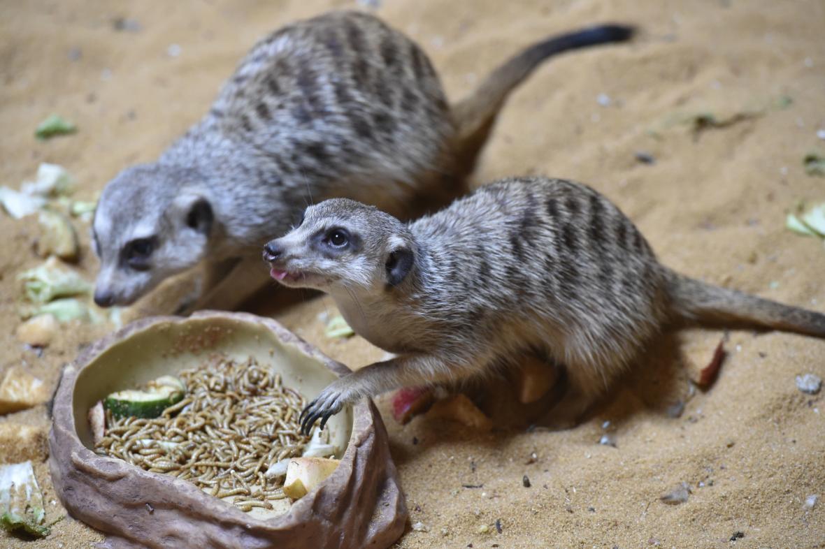 Nový pavilon Kalahari v olomoucké zoo