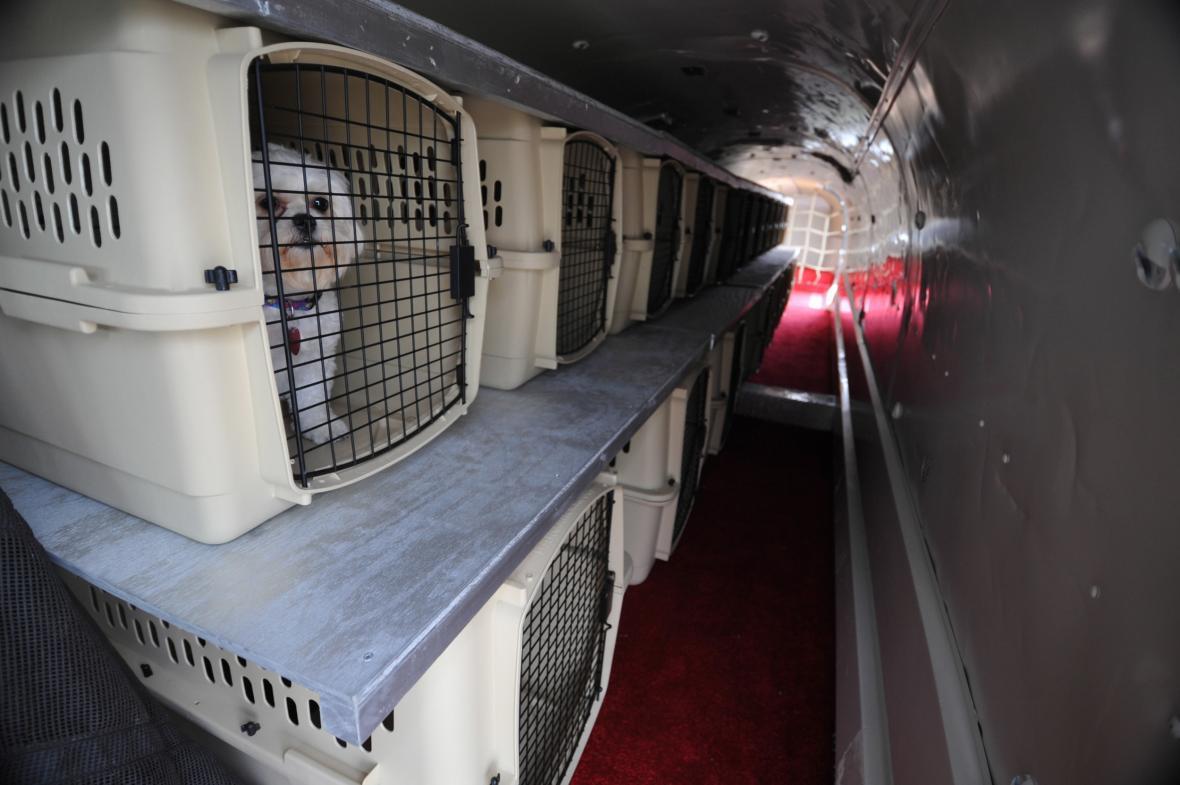 Domácí mazlíčci v letadle