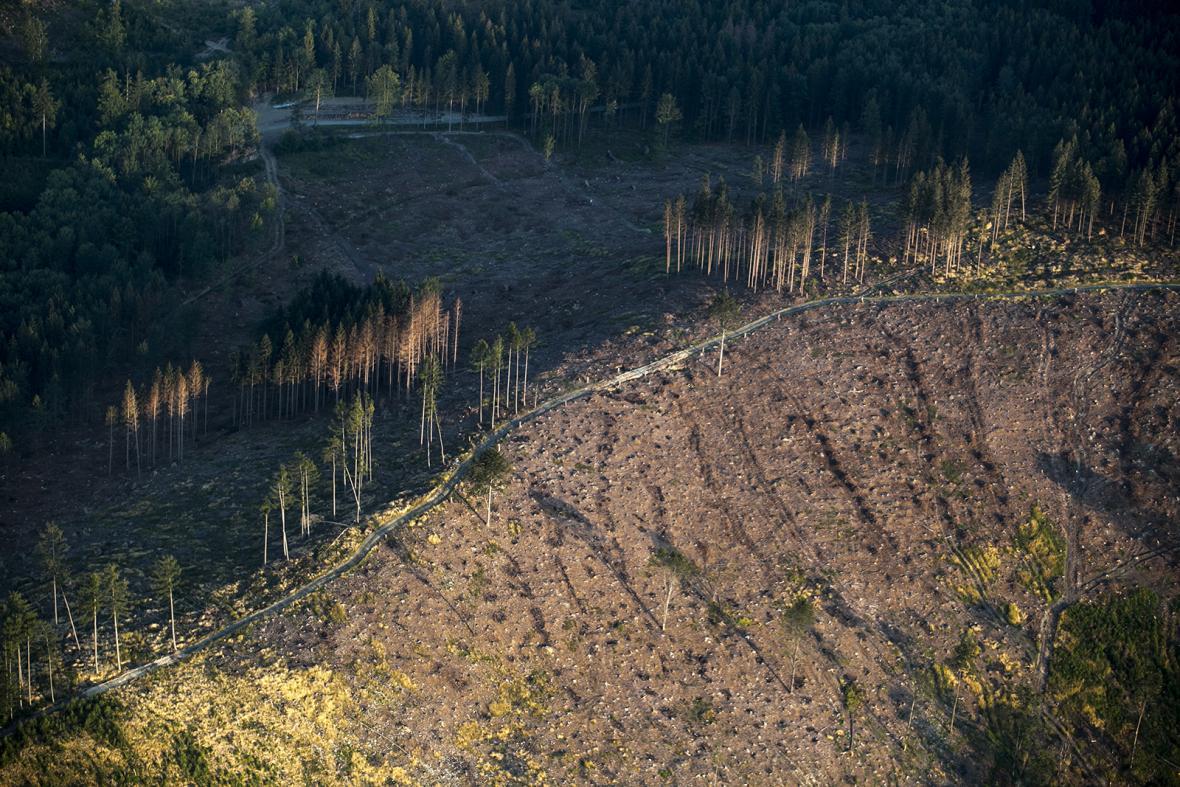 Likvidace lesů v Nízkém Jeseníku zasažených kůrovcem