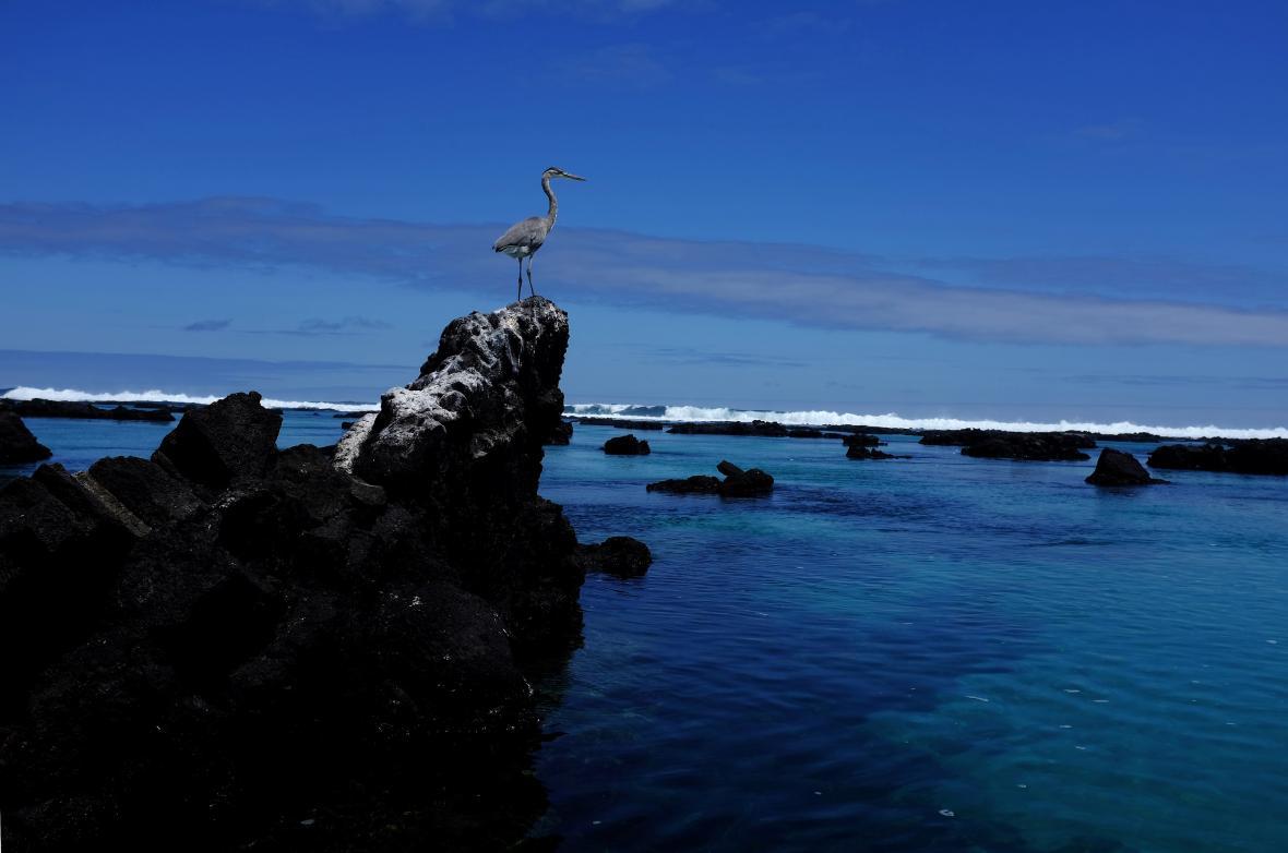 Život na Galapágách