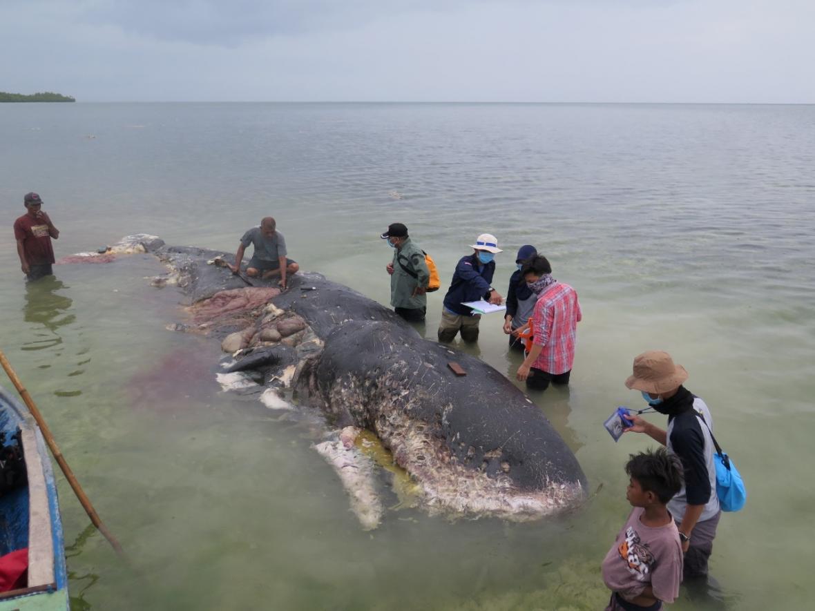 Velryba měla střeva plná odpadků