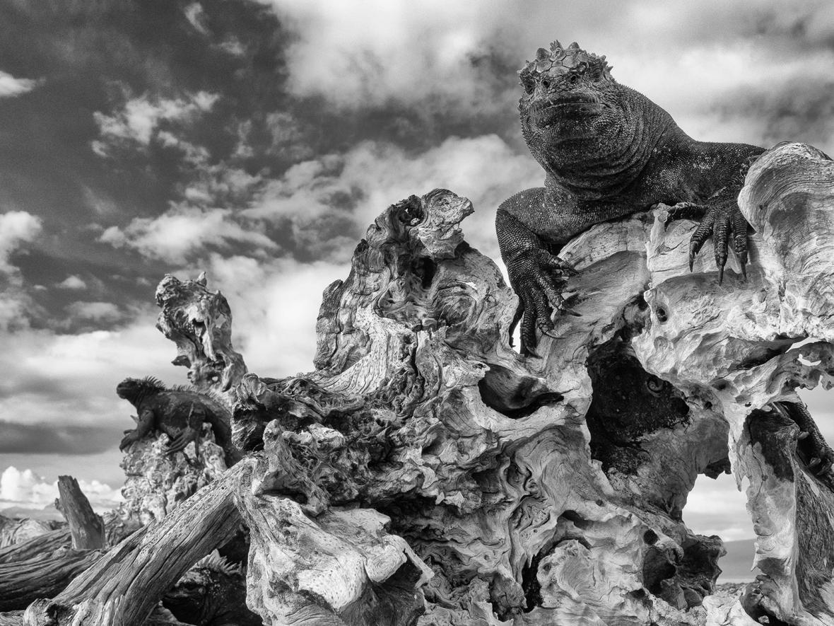 Fotosoutěž Capturing Ecology 2018