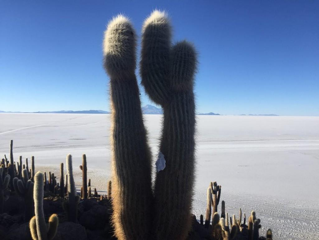 V oblasti pláně Uyuni leží největší zásobárna soli na planetě