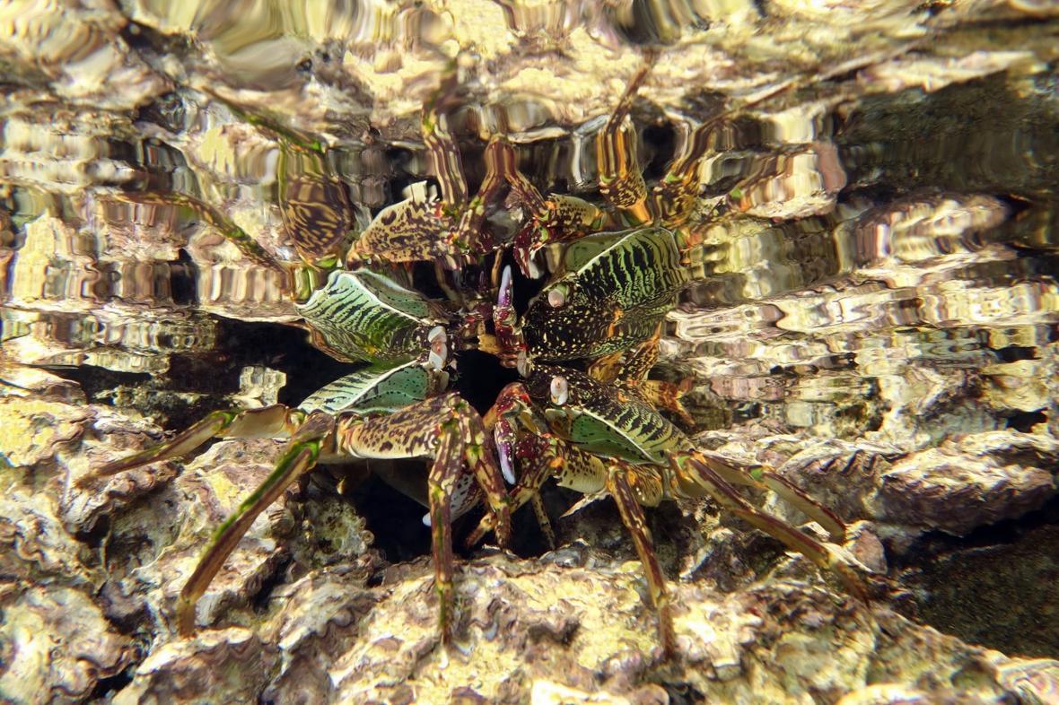 Širokoúhlé snímky kompaktním fotoaparátem: Reflection of a Crab