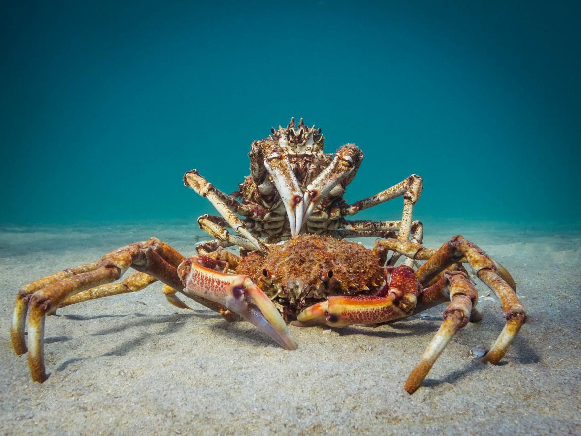 Širokoúhlé snímky kompaktním fotoaparátem: 1. místo Cannibal Crab
