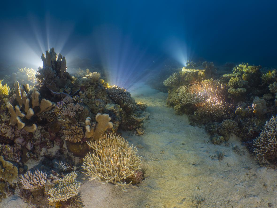 Korálové útesy: A Reef that Glows