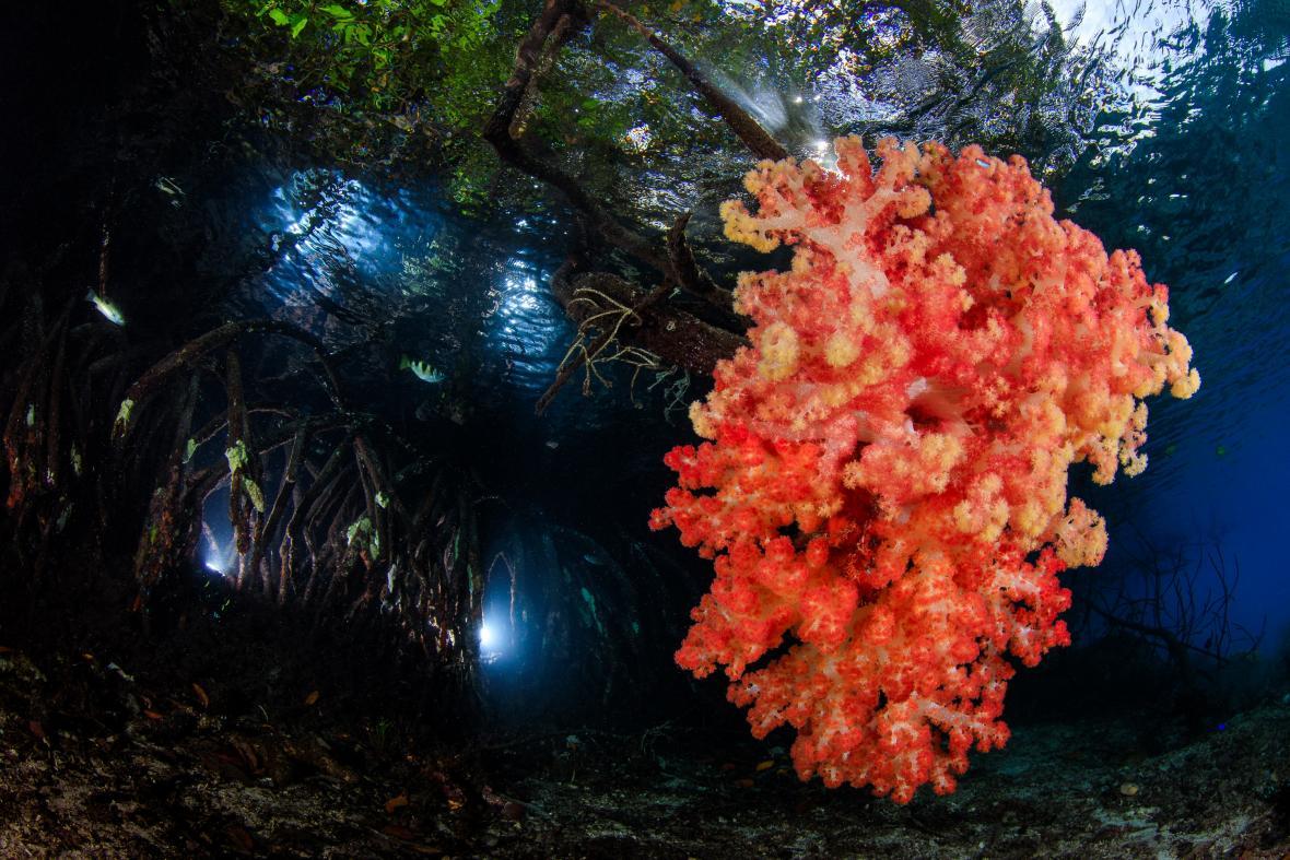 Korálové útesy: 1. místo; Mangrove