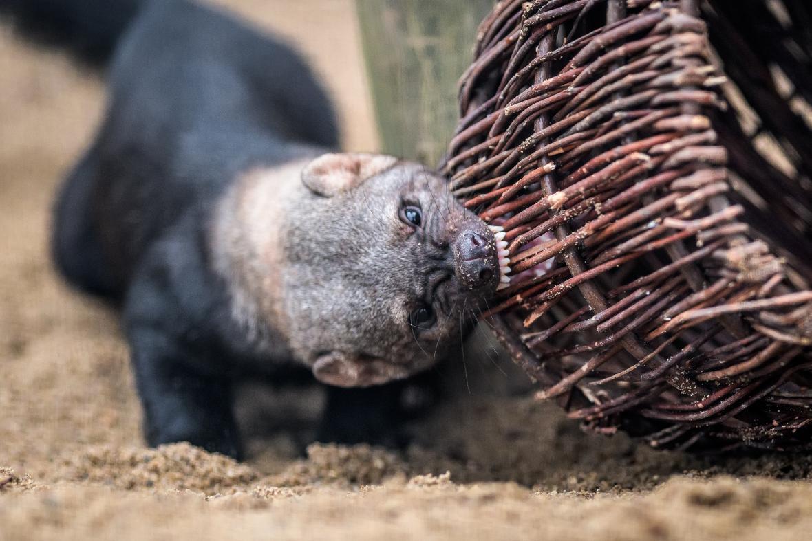 Enrichment pro zvířata Zoo Praha