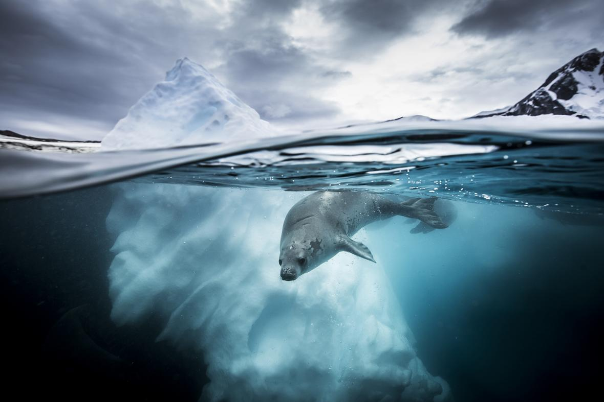 Underwater Photographer of the Year 2019