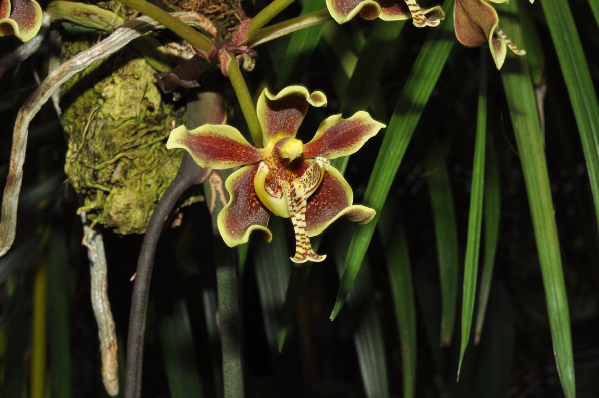 Výstava orchidejí v pražské botanické zahradě