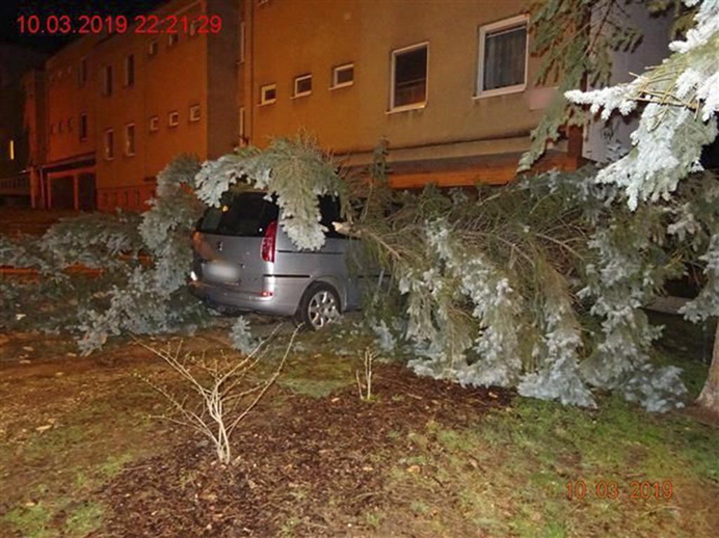 Pražští hasiči zasahovali během nedělního večera až do 6. hodiny ranní u celkem 35 případů, které souvisely se silným větrem.