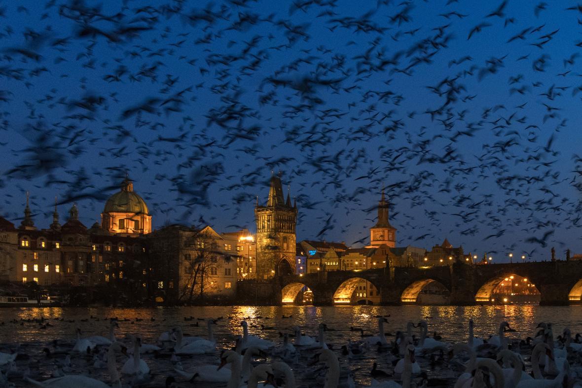 Nominace Czech Nature Photo 2019