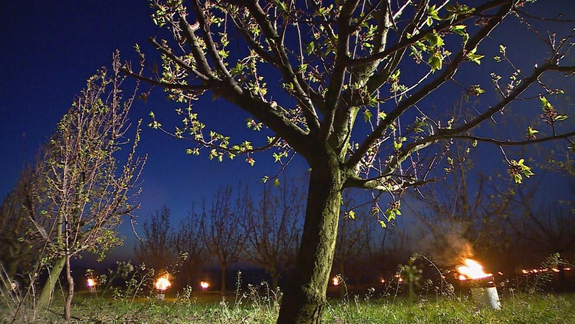 Parafínové louče v meruňkovém sadu ve Slupi