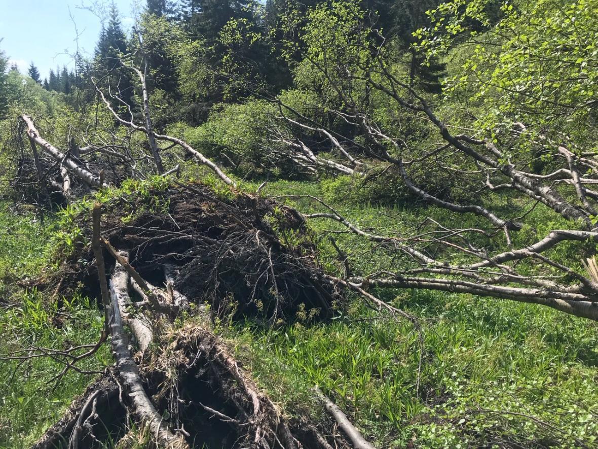 Velká lavina v Jeseníkách udělala místo vzácným druhům rostlin a živočichů