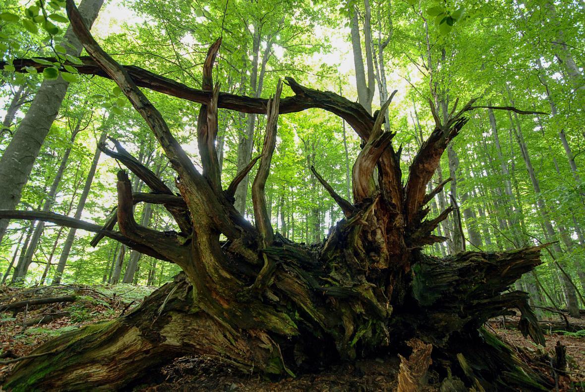 Národní přírodní rezervace Mionší v Beskydech