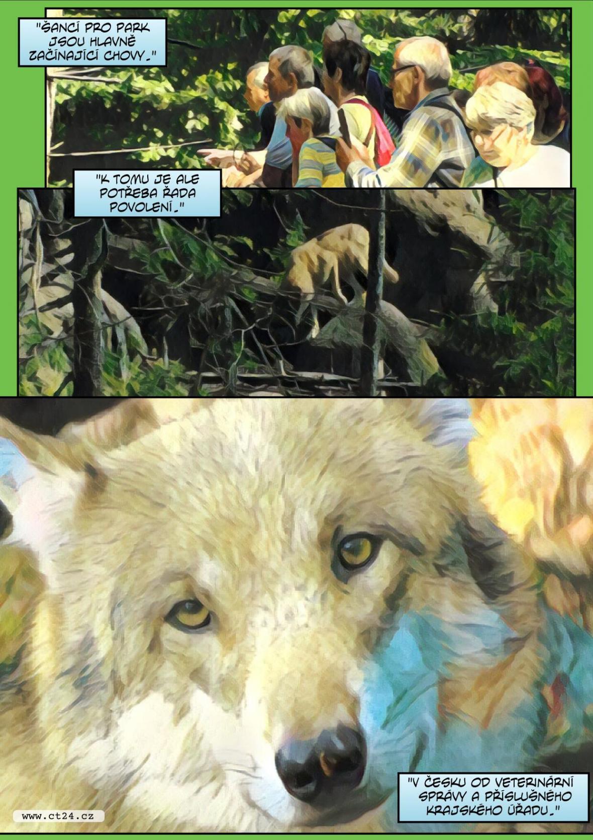Komiks: Řízený chov vlků na Šumavě