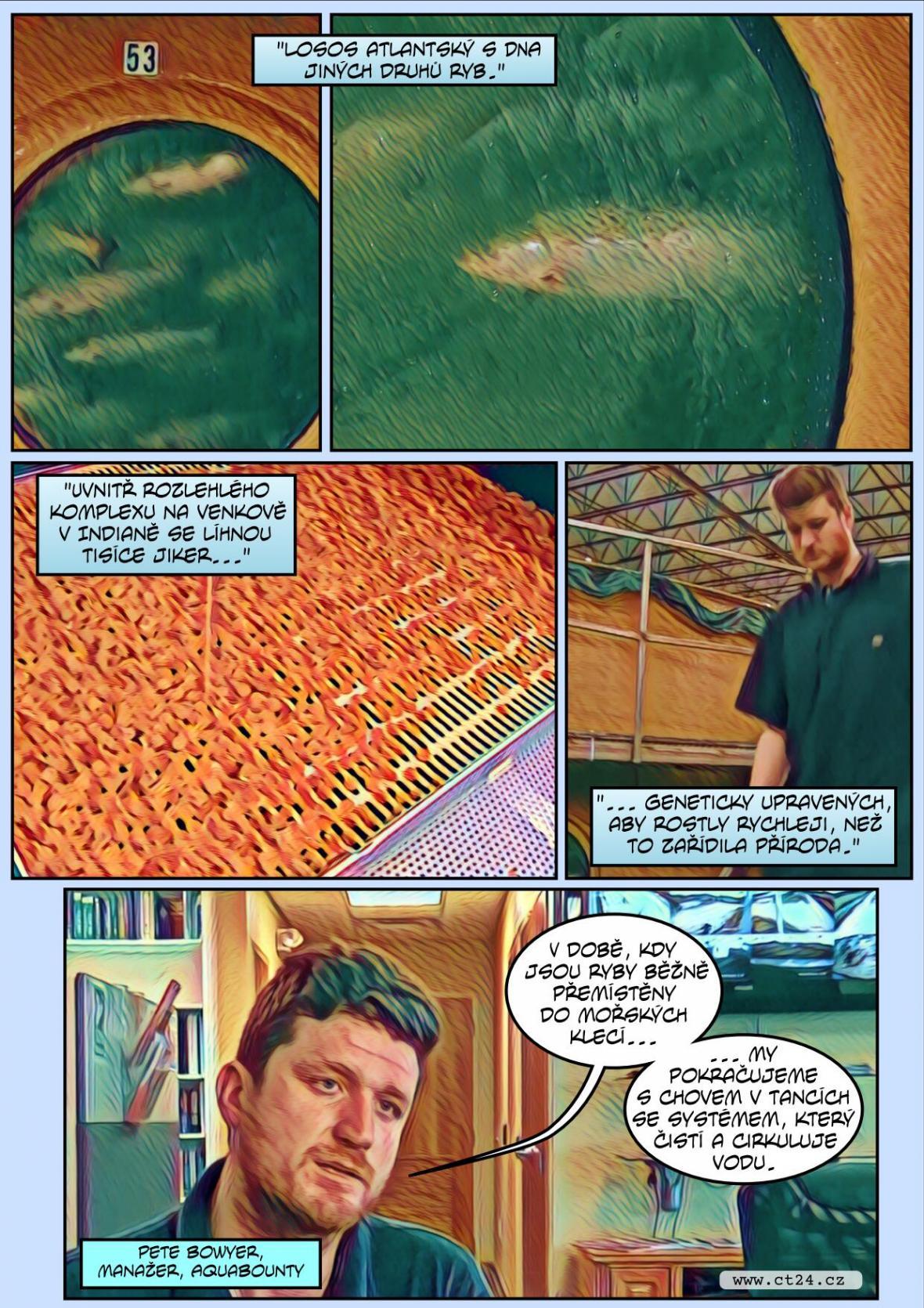 Komiks: Geneticky modifikovaný losos