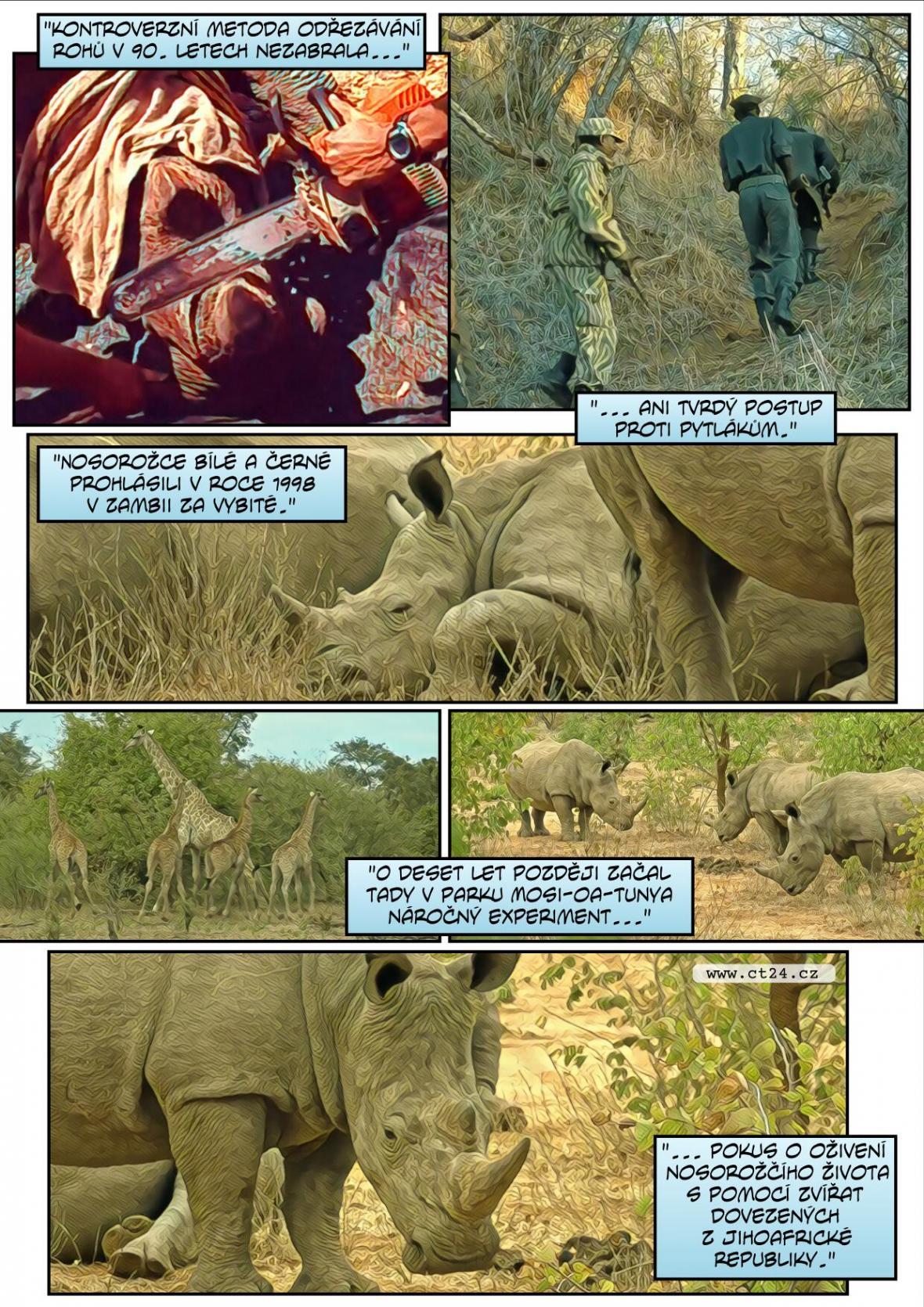 Návrat nosorožců do přírody