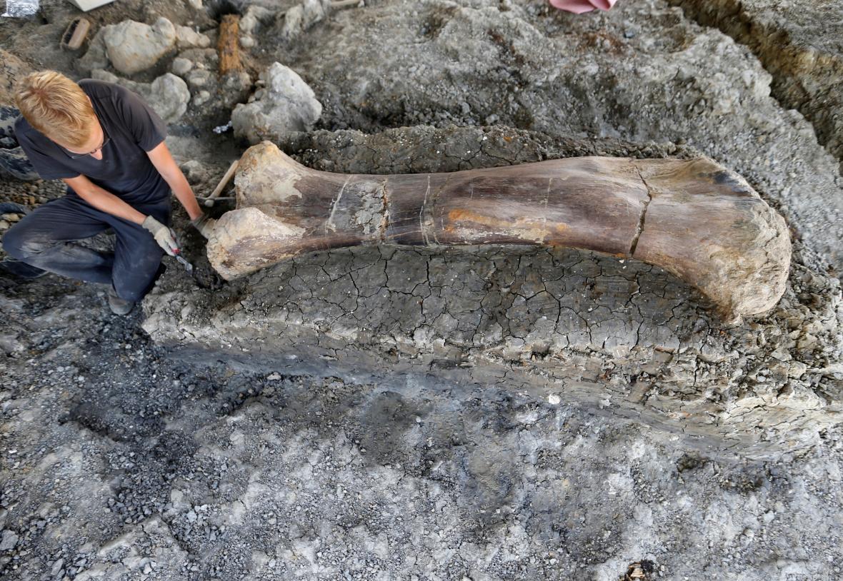 Dvoumetrová dinosauří kost nalezená ve Francii