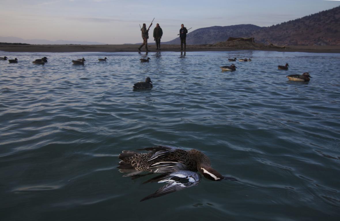 Masakr ptáků na Kypru