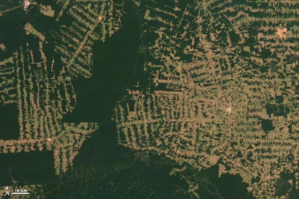 Deforestace v brazilském státě Rondonie