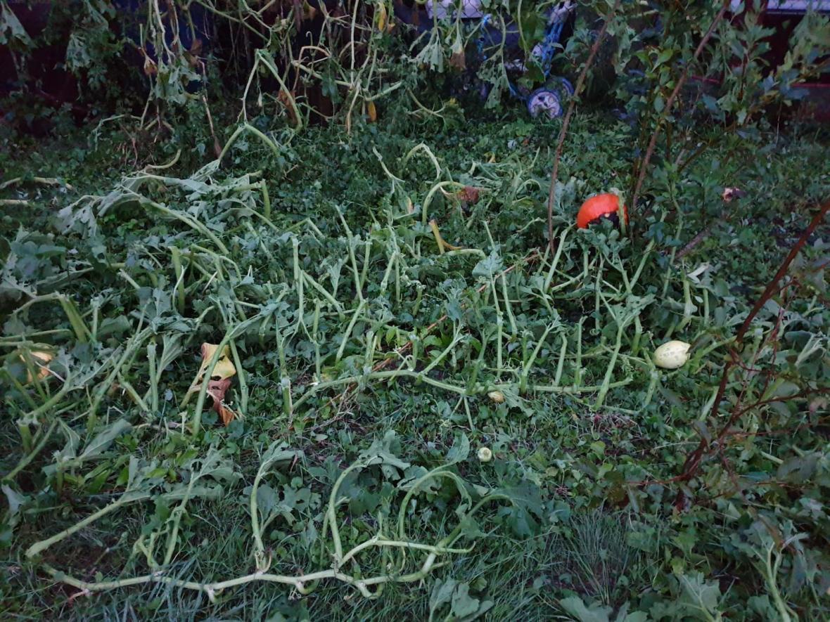 Zničená úroda po bouřce v Chlebovicích na Frýdecko-Místecku