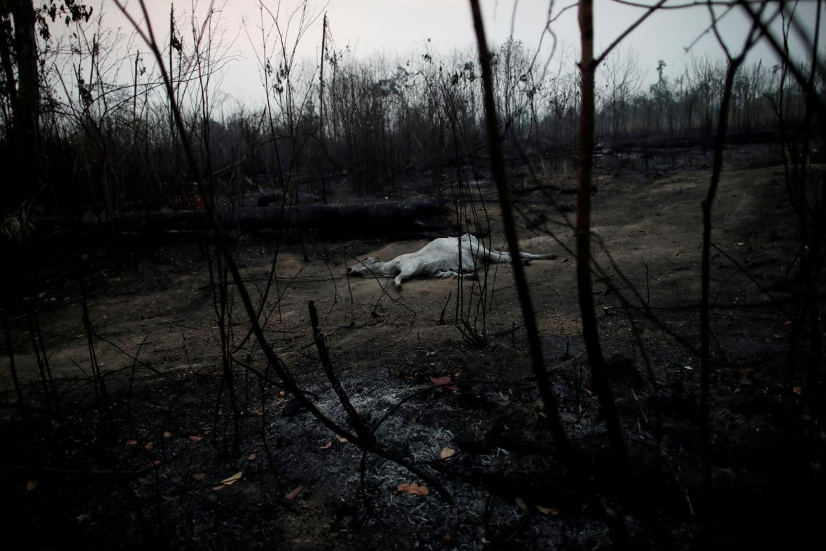 Požáry v Amazonii