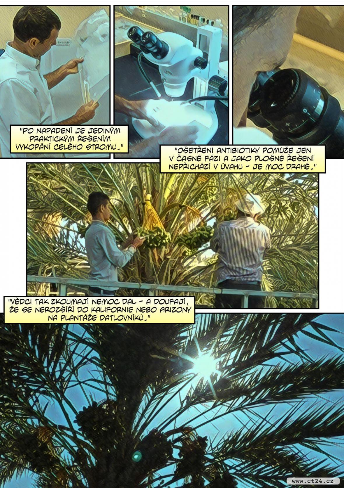 palm na floridě