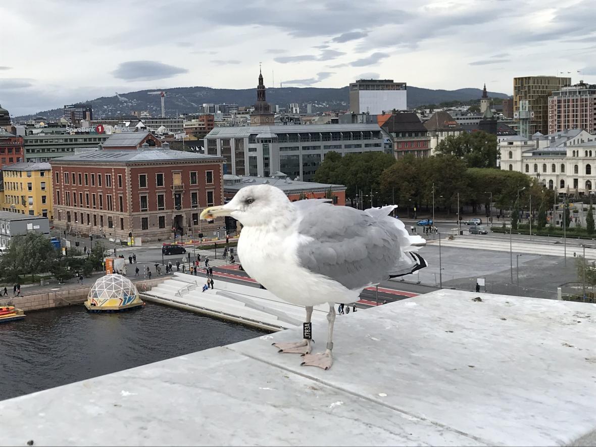 Výhled z opery v Oslu