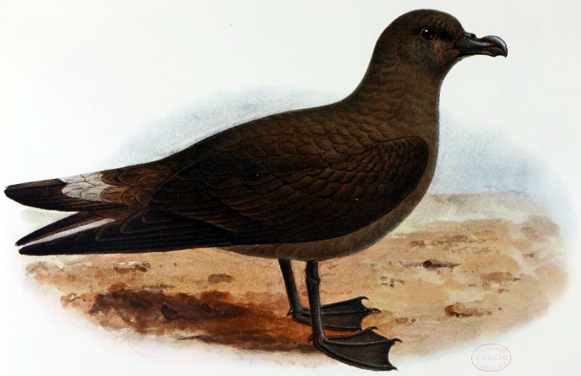 Nejohroženější ptáci severní ameriky