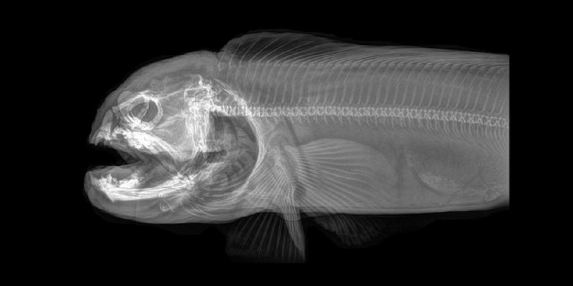 Zvířata pod rentgenem