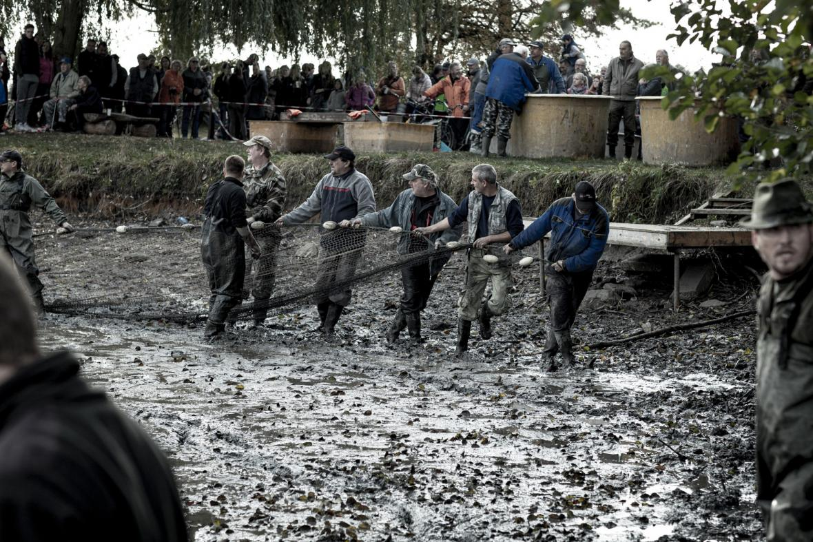 Výlov rybníka v Pečkách