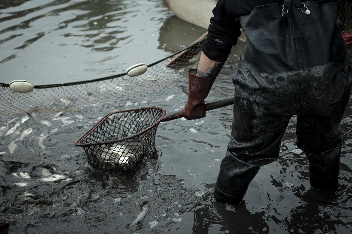 K rybníku na Benešově louce už od brzkého rána proudí jednotlivci i skupinky. Rybáři už mají nachystané vybavení, na louce vedle rybníka jsou přichystané velké kulaté kádě, na rybníce vesluje jeden z rybářů na loďce.