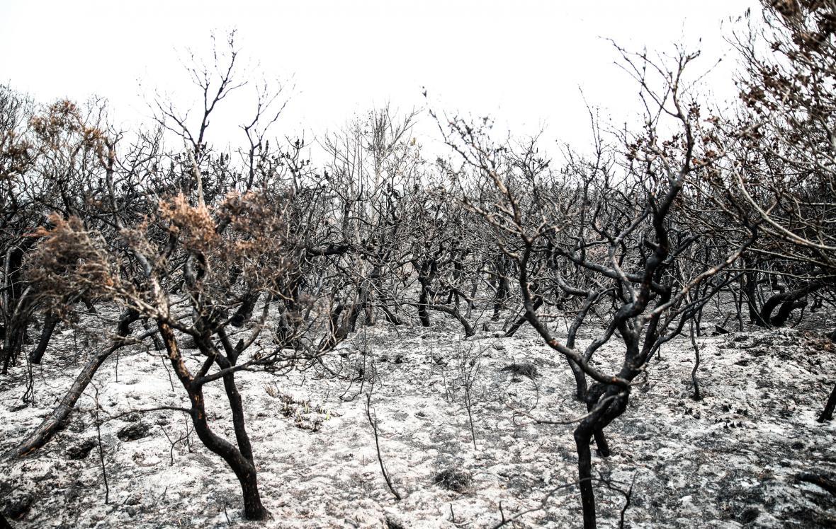 Shořelé křoviny v Novém Jižním Walesu