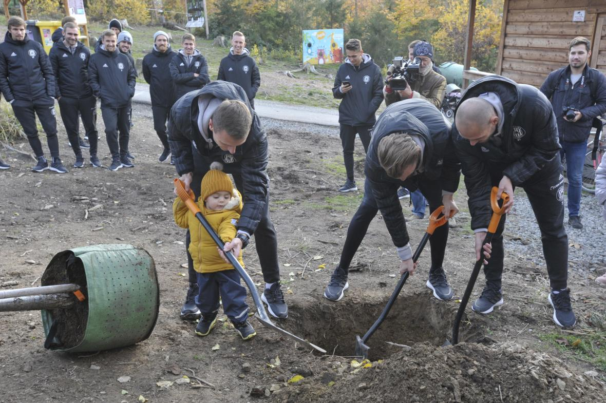 Fotbalisté Sigmy Olomouc při výsadbě stromů v zoo