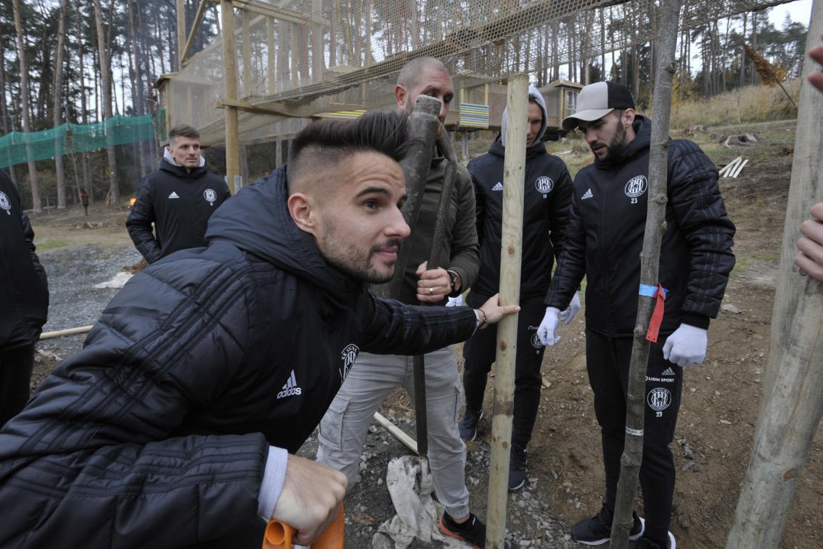 Fotbalista Sigmy Olomouc Martin Hála sadí strom v areálu zoo