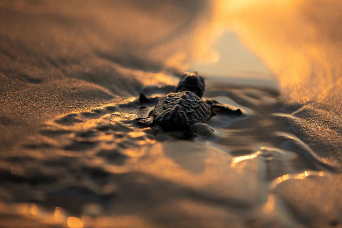 Od ptačí po želví perspektivu