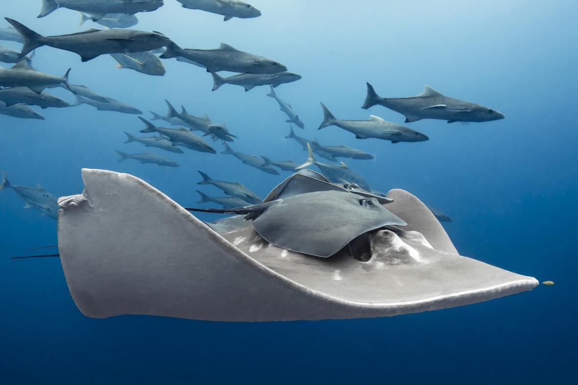 Paula Vianna, vítěz fotografie Život mořských zvířat