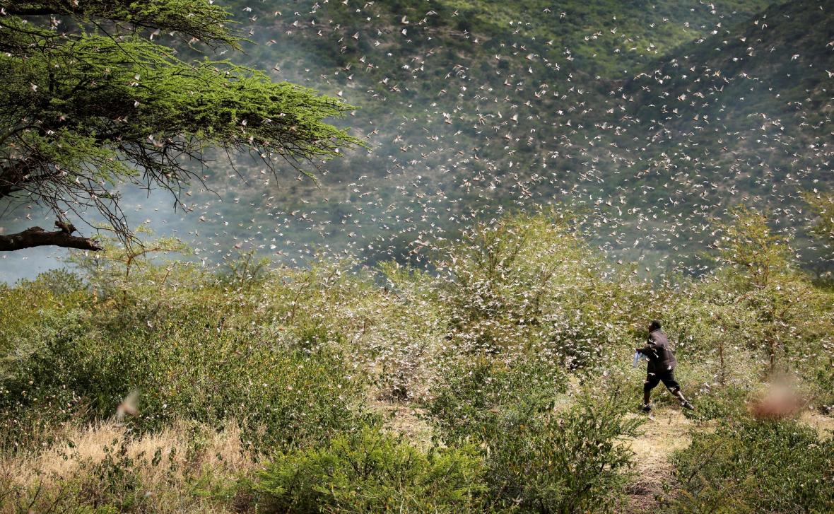 Africký roh pod tlakem sarančat
