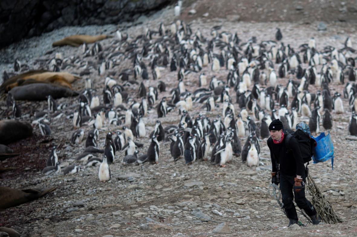 Antarktická expedice řeší dramatický úbytek populace tučňáků