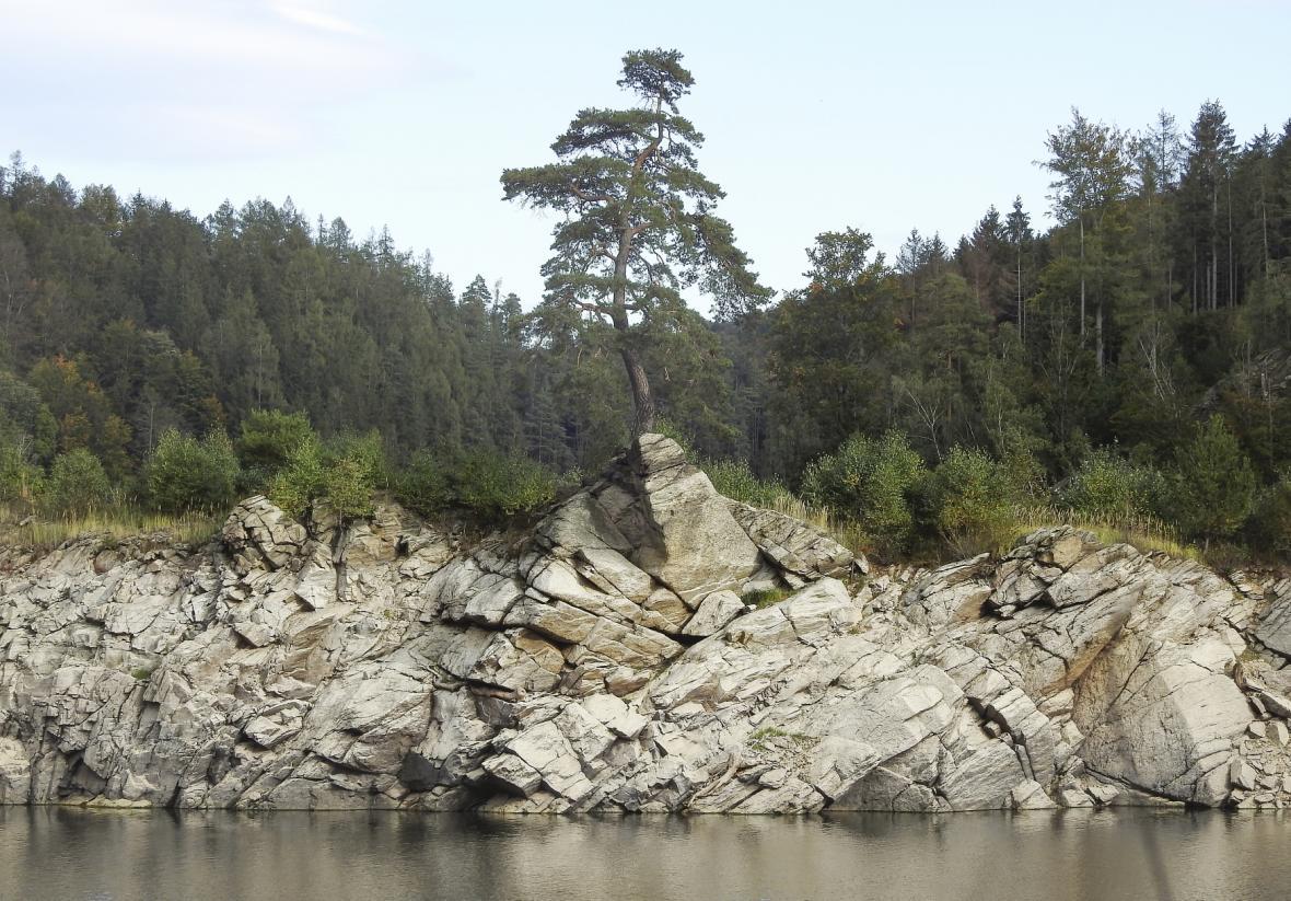 Chudobínská borovice