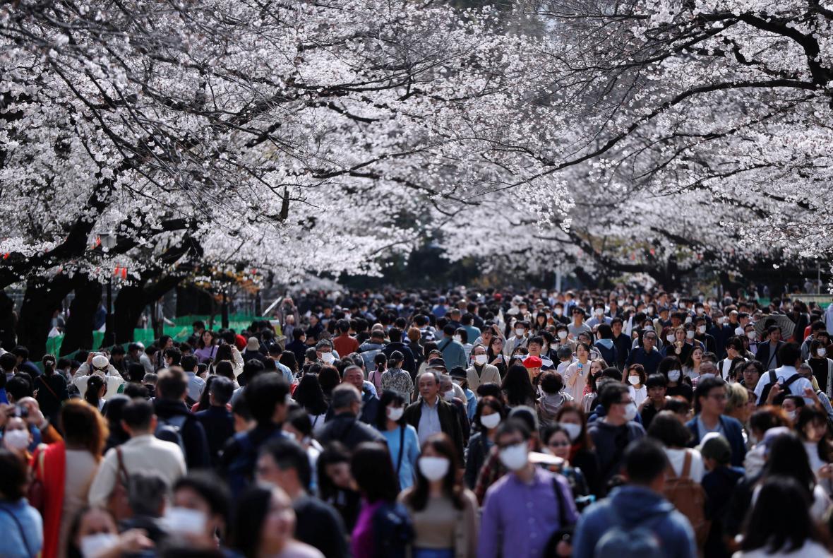 V parku Ueno v japonském Tokyu se místo turistů prochází holub